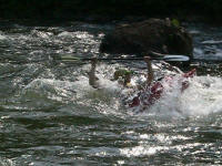 Brandon makes a splash - Lower Nolichucky, TN
